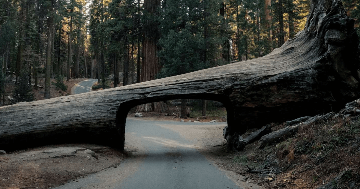 Sequoia and Kings Canyon park